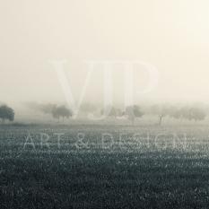 _foggyland